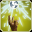 Bane_Flare_icon.png
